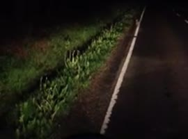Bunny Won't Get Off Road - Video