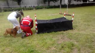 Dog Don't Make Agility Test - Video