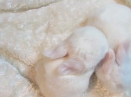 Cute Sleepy Baby Bunny - Video