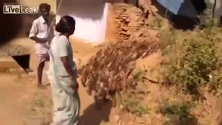 That's how many ducks cry - Video
