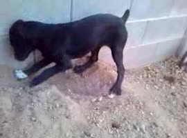 Determined Dog Won't Stop Digging! - Video