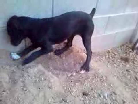 Determined Dog Won't Stop Digging!
