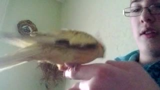 Parrot training! - Video