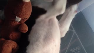 Cute pup reaction when it hears its name - Video