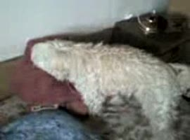 Dog Makes Love With Toy # 3
