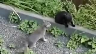 IDIOT CATS  :D - Video