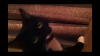 Cat Fascinated By Whistling - Video