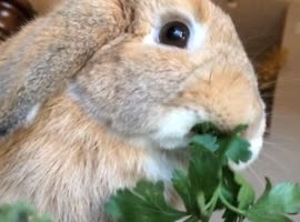 Rabbit Eating in Slow Motion - Video
