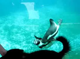 -Penguin vs Dog's Tail- - Video