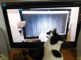 Cat Copies Her Own Moves! - Video