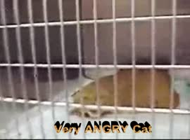 Very Angry Cat