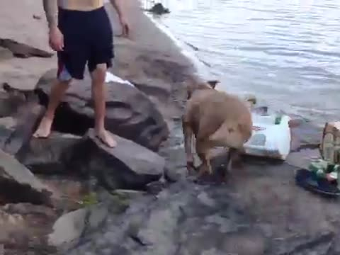 Adorable Crying Dog to the Rescue