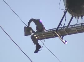 Bird Gets Saved from Power Lines