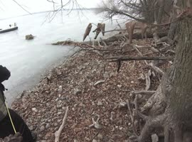 Deer Rescued From Lake - Video