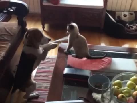 Cute puppy-kitten play!