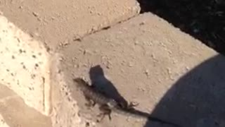 Baby Dragon Captured! - Video