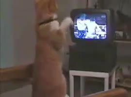 CAT THAT IS BOXING