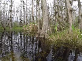Face to Face With a Baby Alligator! - Video
