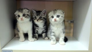 Adorable Kittens Moving Their Heads In Sync - Video