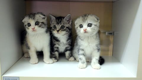 Adorable Kittens Moving Their Heads In Sync