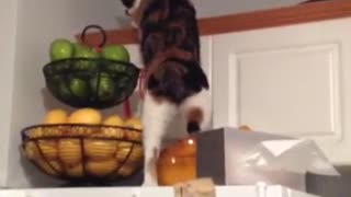 Cat Climb Doesn't Go As Planned!