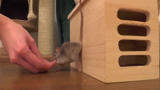 Really smart mouse - Video