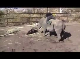 Riding a rhino - Video