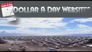 Web Design Seo Company - Dollaradaysites - Video