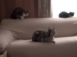 FUNNY CATS ATTACK - Video