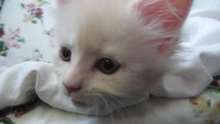 Cute kittens  are  very  interested. - Video