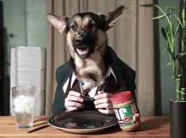 Peanut butter German Shepherd time