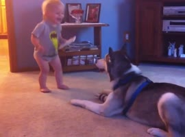 Baby And Husky Have Deep Conversation - Video