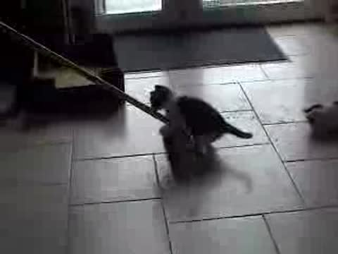 Kitten playing with a broom