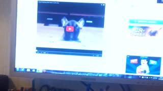 The reaction of this French bulldog will make you laugh like crazy! - Video