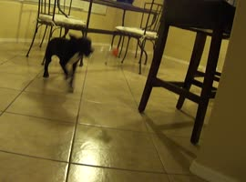 3-Month-Old Puppy Battles Plastic Bottle - Video