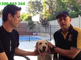 Tritronics Bark Collar Stops Harry - Easy Way to Stop a Dog Barking - Video
