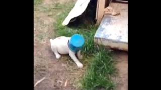 Bucket Gets Stuck on Adorable Puppy's Head - Video