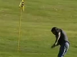 -Fox Steals Golf Balls in Switzerland- - Video