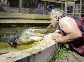 Man Lets Gator Take Food From Mouth - Video
