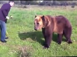 Worlds Most Talented Grizzly Bear - Video