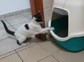 Kitten Practices Boxing Skills!