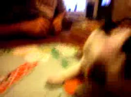 _Pickle the cat - plays Monopoly_ - Video