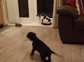 Puppy Meets Cat For First Time! - Video