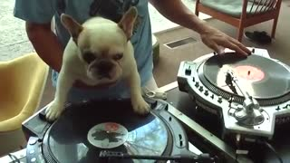 Dog Is A Dj - Video