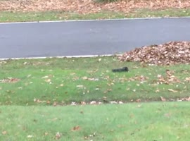 Drunk Squirrel Has Trouble Staying Upright - Video