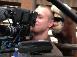 Horse Nibbles Cameraman's Ear - Video