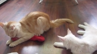 Sneaky Cat Steals From Unsuspecting Friend - Video