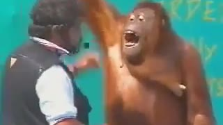 Monkey show and other animals video clips and... - Video