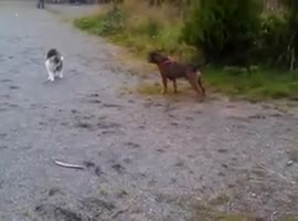 Watch a cat fend off a dog by barely moving an inch - Video