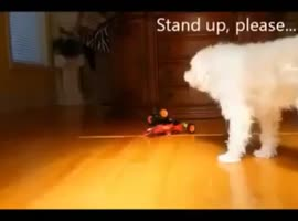 FUNNY VIDEO ANIMAL - Video